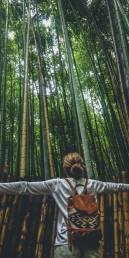 Bosque de bambú en Arashiyama, Japón